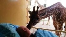 L'ultimo straziante saluto della giraffa