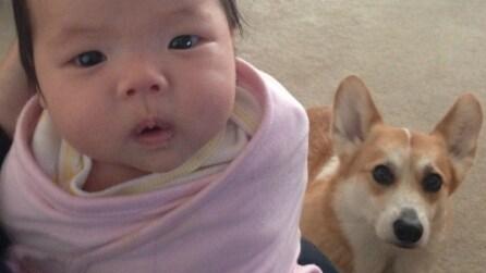Le divertenti immagini di una bimba e del suo cane Corgi