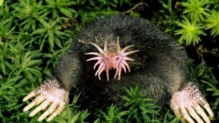 Le 10 foto più assurde del mondo animale