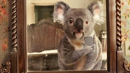 Selfie simpatici dal mondo animale