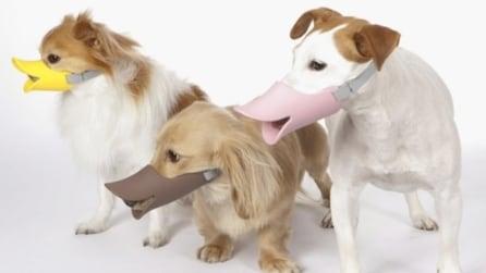 La museruola che fa diventare il cane una papera