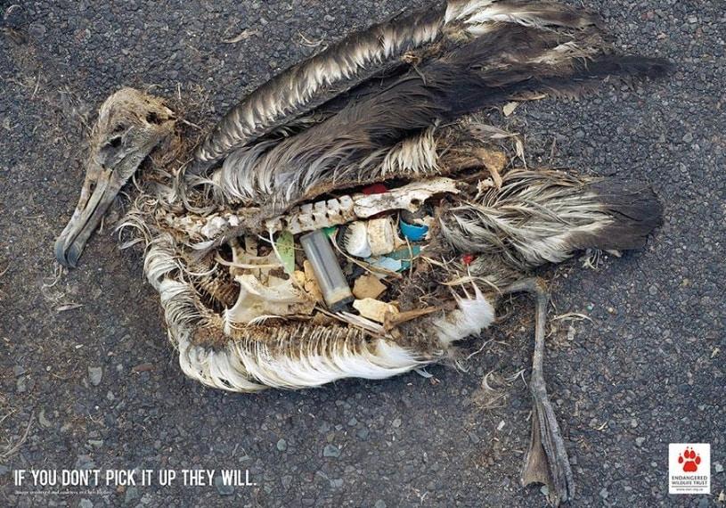Se non getti le cose gli uccelli vivranno