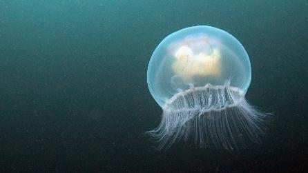 Pesci e animali marini più pericolosi al mondo