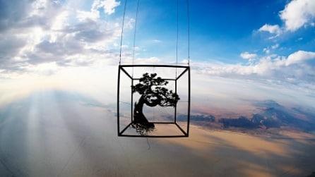 Il bonsai che è arrivato a 31.000 metri dalla superficie terrestre