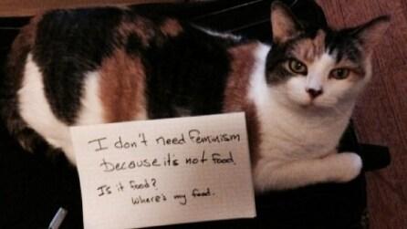 I gatti contro il femminismo