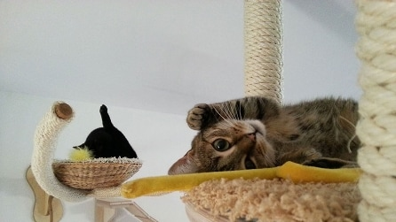 Le 15 idee più originali per rendere migliore la vita dei gatti