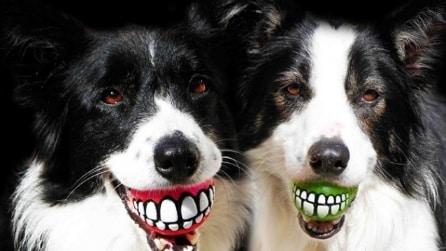 Le 15 migliori invenzioni per cani