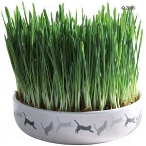Anche l'erba gatta possiede effetti repellenti che tengono lontane le zanzare. La scoperta, relativamente recente, è stata fatta in America dove molti la strofinano sulla pelle.