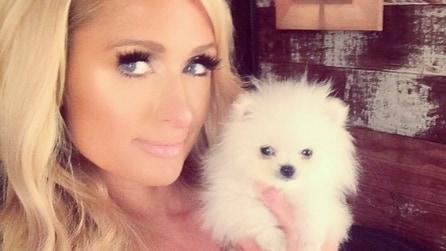 Mr.Incredible, il cane più piccolo del mondo è di Paris Hilton