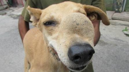 Il cane con un tumore sul muso grande quanto una pallina da tennis