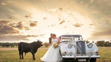 Toro rovina il servizio fotografico agli sposi