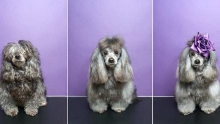Sophie Gamand - Metamorphosis, cani dal toelettatore