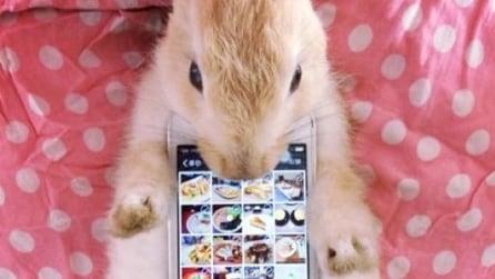 Animali vivi utilizzati come cover per smartphone, l'ultima follia giapponese