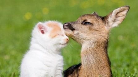 L'amicizia tra animali è una cosa meravigliosa