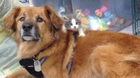 Il cane che aiuta i gattini ad essere adottati