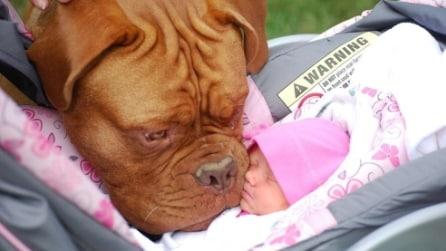 Quando il baby sitter è un cane