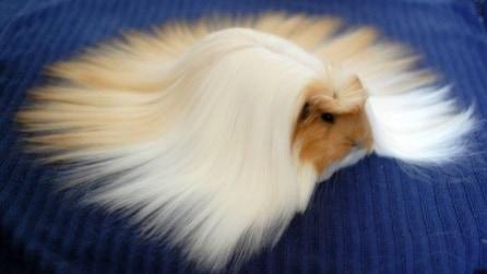 """Animali con """"capelli"""" spettacolari"""