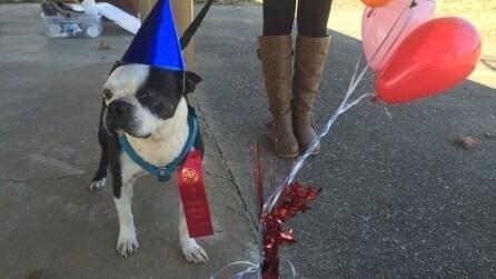 Una festa d'addio per Butch, il cane più fortunato del mondo