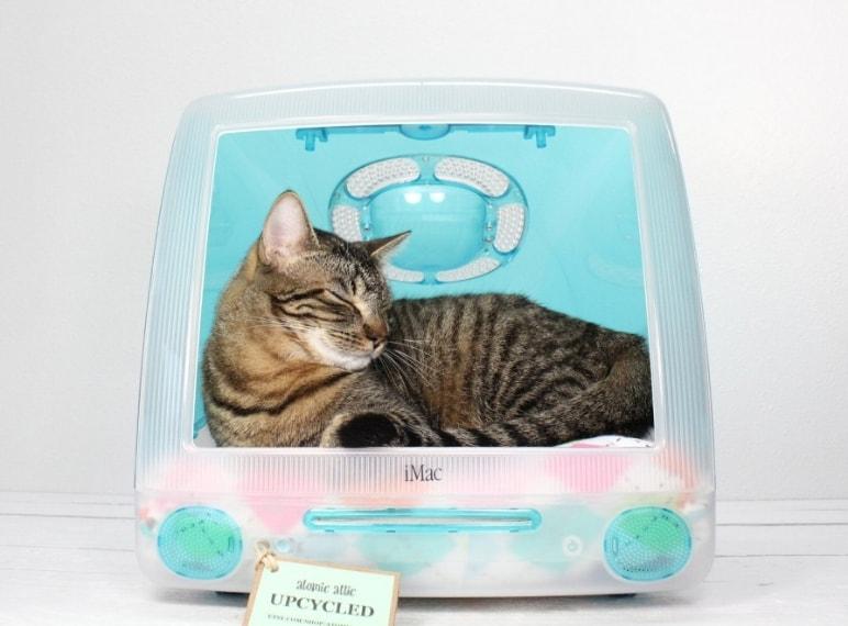 Lo schermo di un Mac diventa una perfetta cuccia riparata e accogliente per i vostri animali domestici