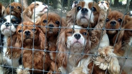 Volontari salvano 108 cuccioli maltrattati e in pessime condizioni