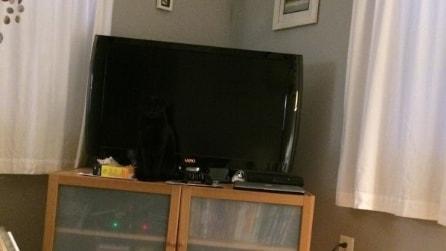 Dove si è nascosto il mio gatto? Quanto tempo impiegate per scoprirlo?