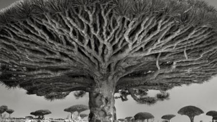 Alberi secolari: ecco gli alberi più vecchi del mondo immortalati dalle foto di Beth Luna