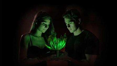 La pianta che si illumina senza elettricità
