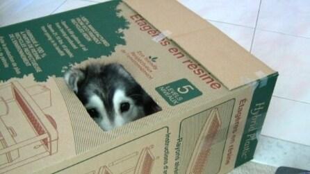 Il cane che crede di essere un gatto