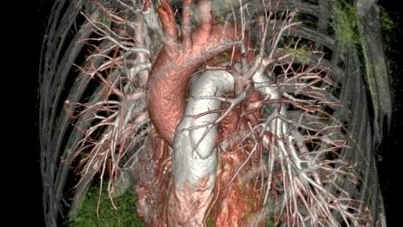 Il corpo umano come non lo avete mai visto