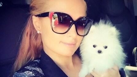 Le star che trasformano i loro animali domestici in celebrità