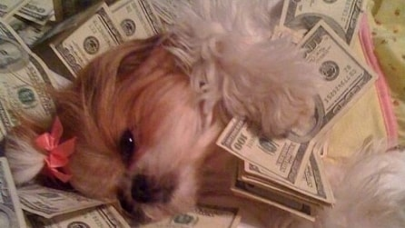 Vita da cani... ricchi!