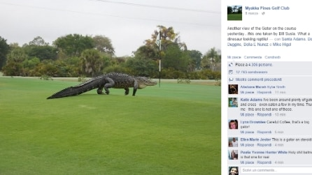 Florida, alligatore gigante sul campo da golf