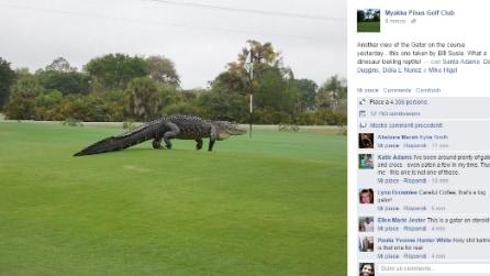 Florida, alligatore gigante sul campo da golf