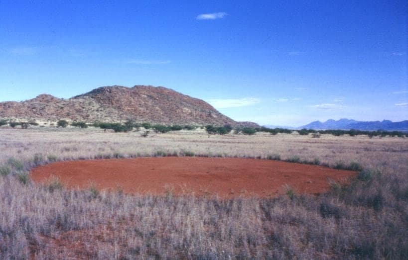 http://de.wikipedia.org/wiki/Feenkreis#/media/File:Feenkreis_Marienflusstal_Namibia.jpg