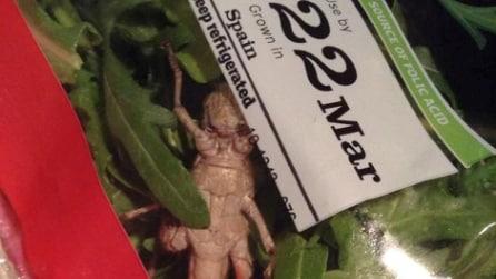 Compra una busta di insalata e ci trova dentro una locusta gigante