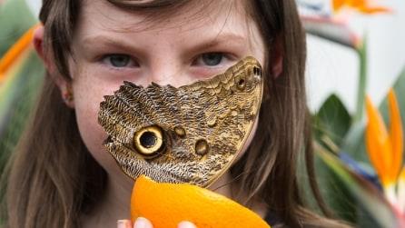 Farfalle in mostra al Museo di Storia Naturale di Londra