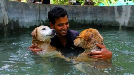 India, la terapia in acqua per i cani con gravi lesioni spinali