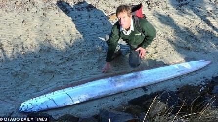 Creatura marina di 3 metri spiaggiata in Nuova Zelanda