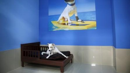 Piccolo paradiso per cani a Dubai: il resort di lusso riservato ai nostri amici a quattro zampe