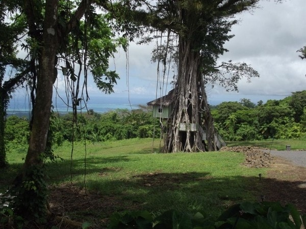 """È il primo e unico """"treesort"""" in tutto il Pacifico meridionale."""