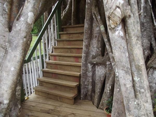 Sorge all'interno di un enorme albero