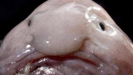 I 10 pesci più spaventosi degli oceani