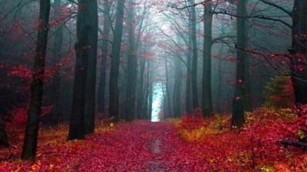 Gli scenari incantati delle 15 foreste più belle del mondo