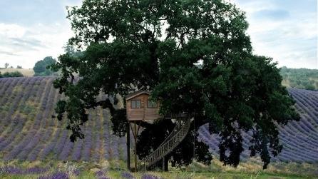 Immersa nel verde: non è una semplice casa sull'albero ma molto di più