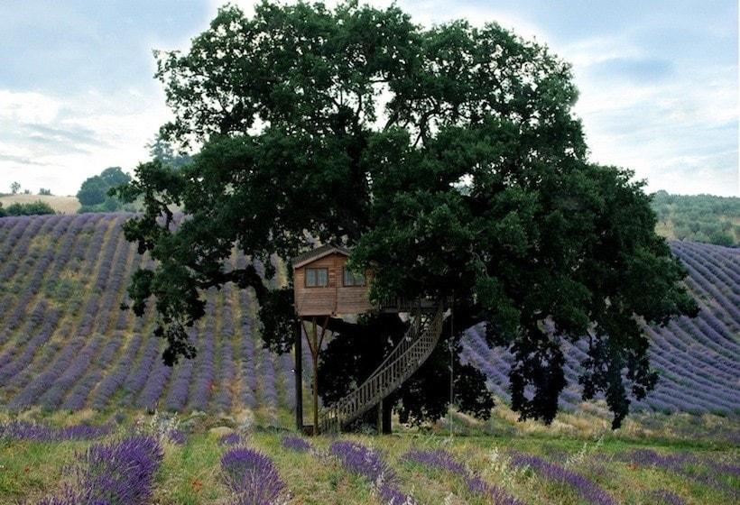Il rifugio dei vostri sogni. La splenida suite sorge tra la chioma folta di una quercia secolare.