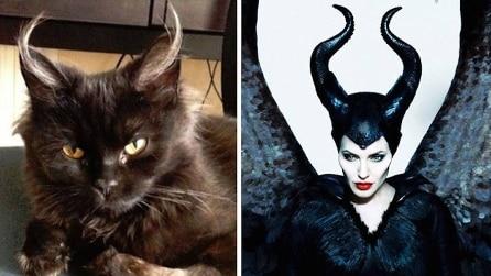 Le incredibili somiglianze tra gatti e personaggi famosi