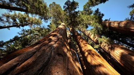 Tra i giganti della foresta al Sequoia National Park