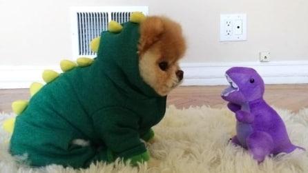 Animali con animali di stoffa: tenerezze con i peluche