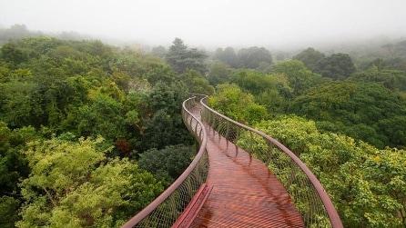 La passeggiata sulla cima degli alberi secolari: una vista mozzafiato