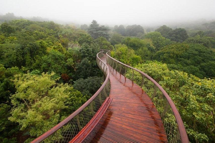 La passerella si muove tra e sulle cime degli alberi del Giardino Botanico Nazionale Kirstenbosch in Sudafrica.
